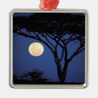 Africa, Tanzania, Tarangire. Acacia tree in Silver-Colored Square Decoration