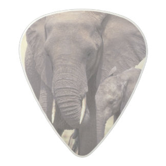 Africa, Tanzania, Tarangire National Park. 2 Acetal Guitar Pick