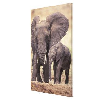 Africa, Tanzania, Tarangire National Park. 2 Gallery Wrapped Canvas