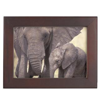 Africa, Tanzania, Tarangire National Park. 2 Keepsake Box