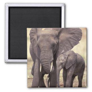 Africa, Tanzania, Tarangire National Park. 2 Magnets