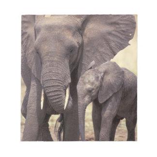 Africa, Tanzania, Tarangire National Park. 2 Notepad