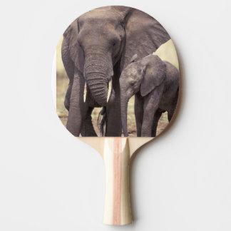 Africa, Tanzania, Tarangire National Park. 2 Ping Pong Paddle