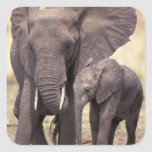 Africa, Tanzania, Tarangire National Park. 2 Square Sticker