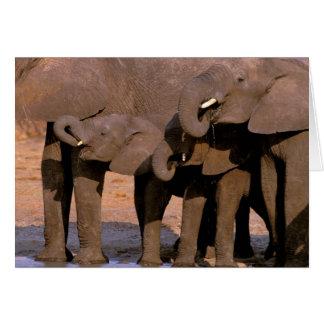 Africa, Tanzania, Tarangire National Park. Card