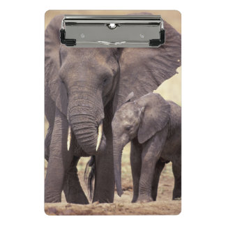 Africa, Tanzania, Tarangire National Park Mini Clipboard
