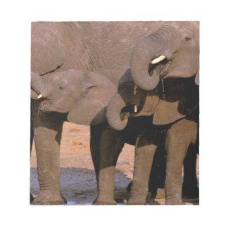 Africa, Tanzania, Tarangire National Park. Notepad