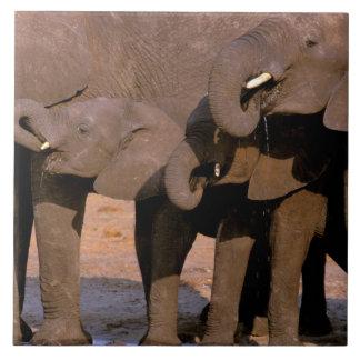 Africa, Tanzania, Tarangire National Park. Tile