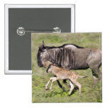 Africa. Tanzania. Wildebeest mother and baby at Pinback Buttons
