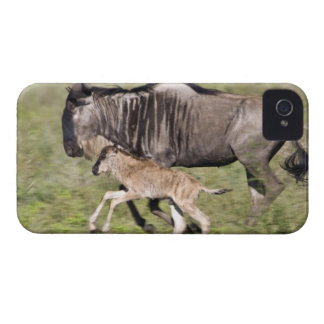 Africa. Tanzania. Wildebeest mother and baby at iPhone 4 Cover