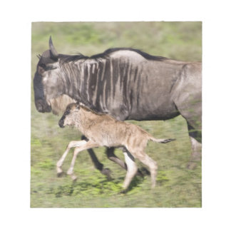 Africa. Tanzania. Wildebeest mother and baby at Notepads