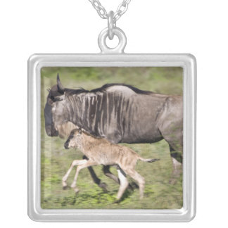 Africa. Tanzania. Wildebeest mother and baby at Silver Plated Necklace