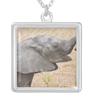 Africa. Tanzania. Young Elephant at Tarangire Silver Plated Necklace