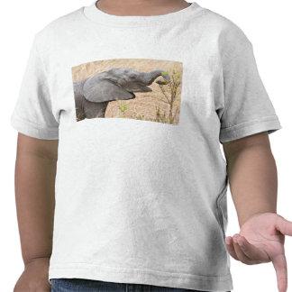 Africa Tanzania Young Elephant at Tarangire Tshirts