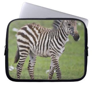 Africa. Tanzania. Zebra colt at Ngorongoro 2 Laptop Sleeve