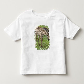 Africa. Tanzania. Zebra colt at Ngorongoro 3 Shirts