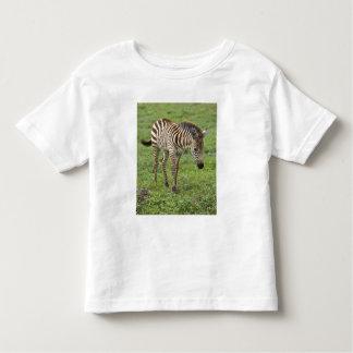 Africa. Tanzania. Zebra colt at Ngorongoro 3 Toddler T-Shirt