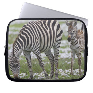 Africa. Tanzania. Zebra mother and colt at Laptop Sleeve