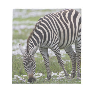Africa. Tanzania. Zebra mother and colt at Notepad