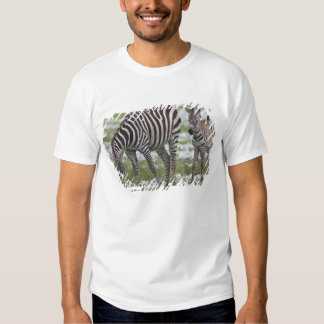 Africa. Tanzania. Zebra mother and colt at Tshirt
