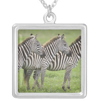 Africa. Tanzania. Zebras at Ngorongoro Crater in Silver Plated Necklace