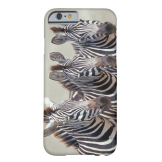 Africa, Tanzania, zebras Barely There iPhone 6 Case