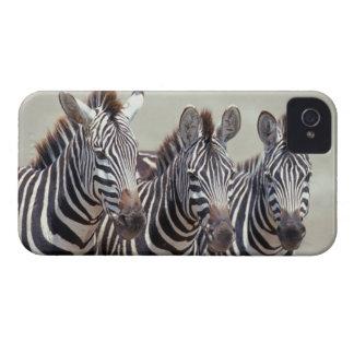 Africa, Tanzania, zebras Case-Mate iPhone 4 Cases