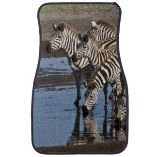 Africa. Tanzania. Zebras drinking at Ndutu in Car Mat