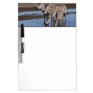 Africa. Tanzania. Zebras drinking at Ndutu in Dry Erase Board