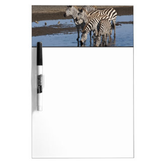 Africa. Tanzania. Zebras drinking at Ndutu in Dry Erase Boards