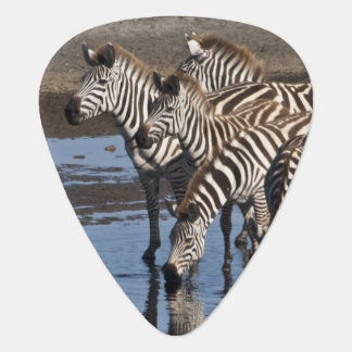Africa. Tanzania. Zebras drinking at Ndutu in Guitar Pick