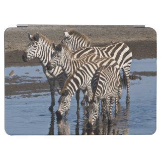 Africa. Tanzania. Zebras drinking at Ndutu in iPad Air Cover
