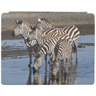 Africa. Tanzania. Zebras drinking at Ndutu in iPad Cover