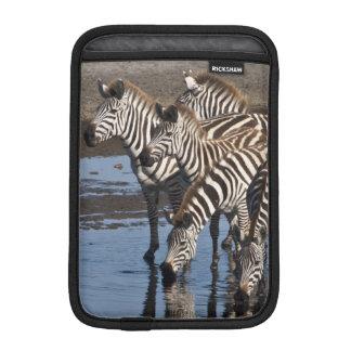 Africa. Tanzania. Zebras drinking at Ndutu in iPad Mini Sleeve