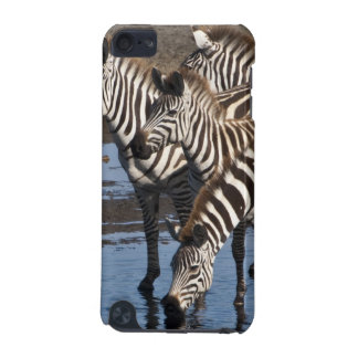 Africa. Tanzania. Zebras drinking at Ndutu in iPod Touch (5th Generation) Cover