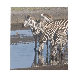 Africa. Tanzania. Zebras drinking at Ndutu in Notepad