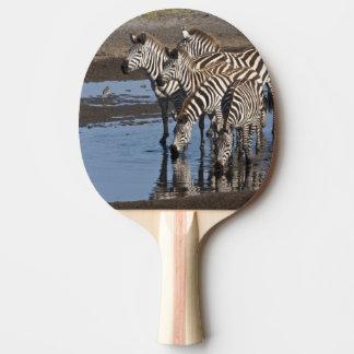 Africa. Tanzania. Zebras drinking at Ndutu in Ping Pong Paddle