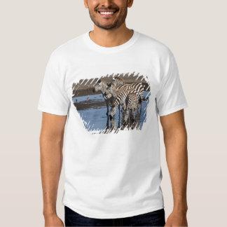 Africa. Tanzania. Zebras drinking at Ndutu in T Shirts