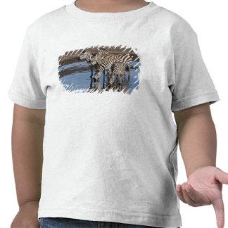 Africa. Tanzania. Zebras drinking at Ndutu in T-shirt