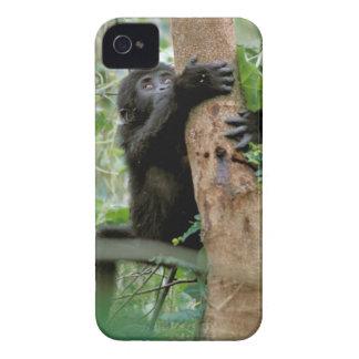 Africa, Uganda, Bwindi Impenetrable Forest iPhone 4 Cover