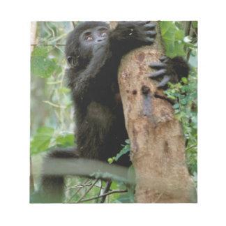 Africa, Uganda, Bwindi Impenetrable Forest Notepad