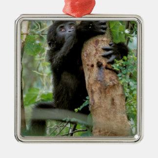 Africa, Uganda, Bwindi Impenetrable Forest Silver-Colored Square Decoration