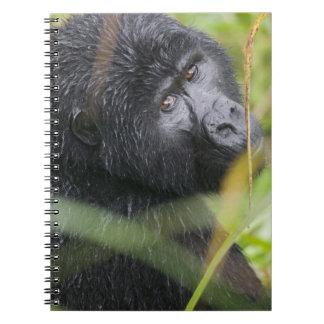 Africa, Uganda, Bwindi Impenetrable National 2 Notebook