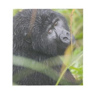 Africa, Uganda, Bwindi Impenetrable National 2 Notepad