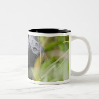 Africa, Uganda, Bwindi Impenetrable National 2 Two-Tone Coffee Mug