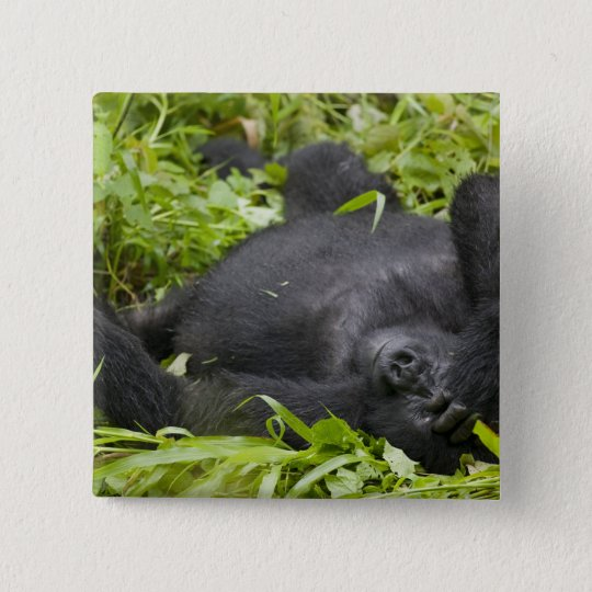 Africa, Uganda, Bwindi Impenetrable National 3 15 Cm Square Badge