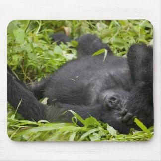 Africa, Uganda, Bwindi Impenetrable National 3 Mouse Pad