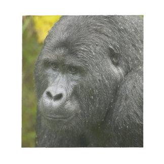 Africa, Uganda, Bwindi Impenetrable National 4 Notepad