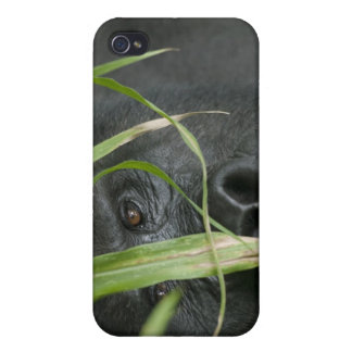 Africa, Uganda, Bwindi Impenetrable National 6 Case For The iPhone 4