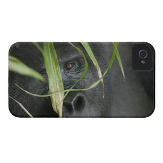 Africa, Uganda, Bwindi Impenetrable National 6 iPhone 4 Case-Mate Case